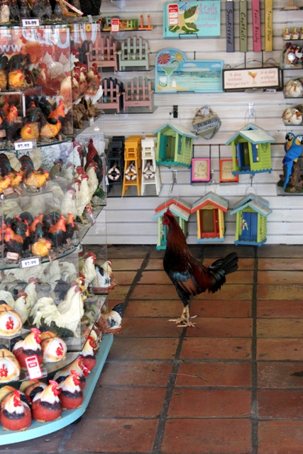 Key West shopping rooster
